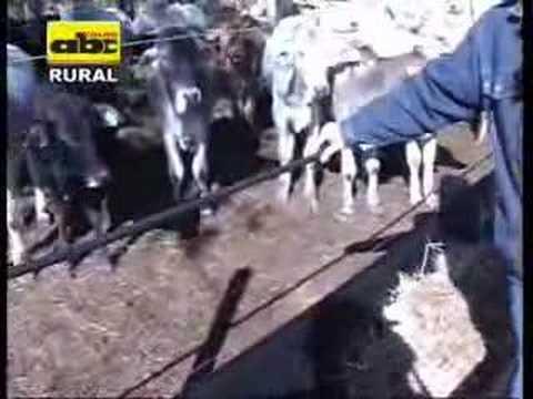Bateas vinílicas para alimentación de ganado