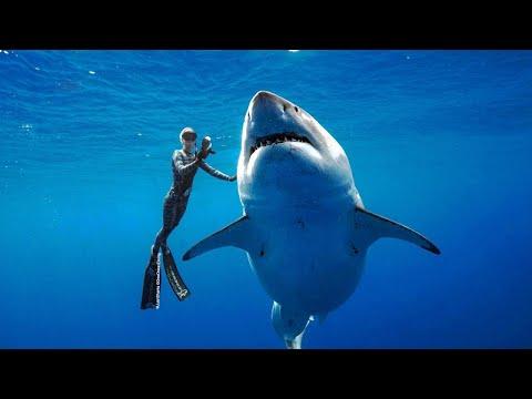 Xxx Mp4 Massive Great White Shark Spotted Near Hawaii 3gp Sex