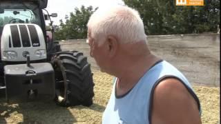TV Pančevo - Silaža - najbolja hrana za stoku