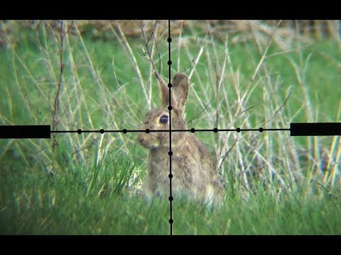Xxx Mp4 The Airgun Show – Scope Cam Rabbit Hunting PLUS Daystate Wolverine R Review 3gp Sex