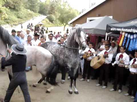 caballos bailando en el expo 2009 del caballo espanol
