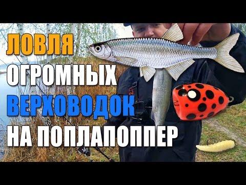 все для рыбалки балахна