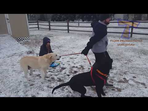 Xxx Mp4 FUNNIEST DOGS In SNOW COMPILATION Haven T Seen Better Yet Enjoy Watching And LAUGH With Us 3gp Sex