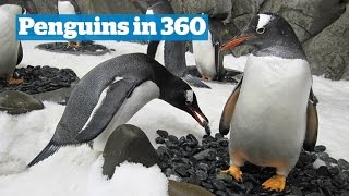 Penguins in 360