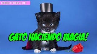 Gato Haciendo Magia!
