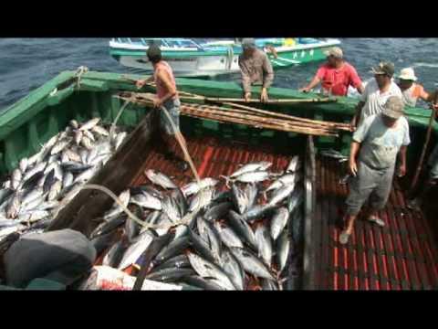 Pescando Atunes Artesanalmente en Ecuador