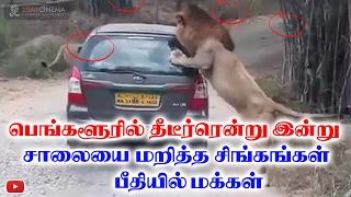 Lion Attacks in Karnataka viral video - 2DAYCINEMA.COM