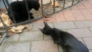Sevimli kedilerin salam savaşı