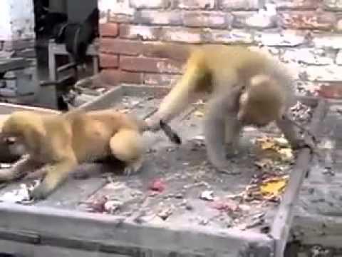 Dog & Monky funny Masti