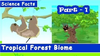 Tropical Forest of world | Kids General Knowledge | Part-1