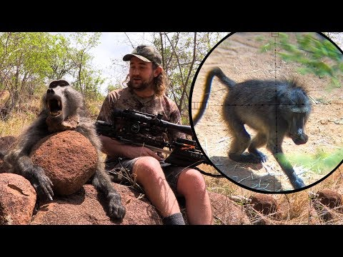 Xxx Mp4 Baboon Hunt With A Crossbow Mission SUB 1 3gp Sex