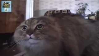 Chat Alors - un chat qui parle et qui dit non