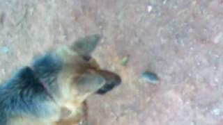 Cachorro X rato (part 1) continua...