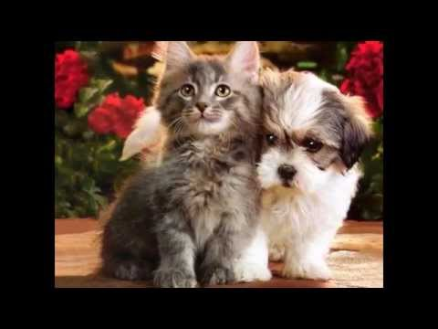 cutest1s (pets and animals) xxx