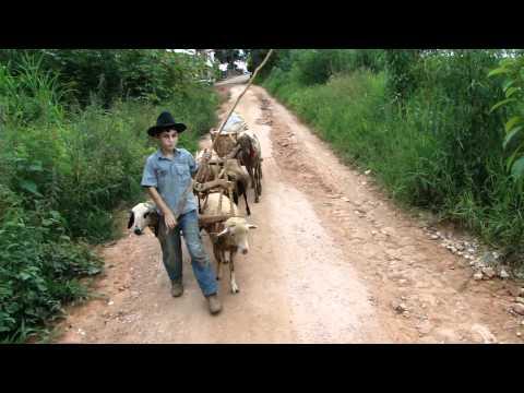 Menino de 9 anos fazendo compras de carro de carneiro em Muzambinho MG