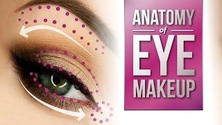 Anatomy of Eye Makeup   Pretty Smart