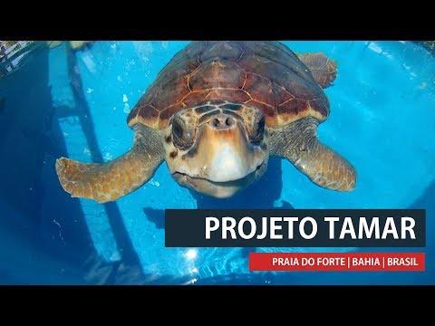 Um pouco sobre o Projeto Tamar na Bahia - TurismoEtc TV