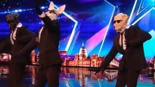 Paws with Soul with some serious pawl moves! | Week 1 | Britain