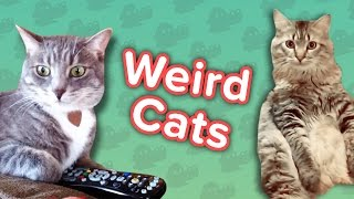 Weird Cats & Dancing Bulldogs! // Funny Animal Compilation