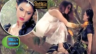 Sesha Dead After Morni Attacked Her? | Naagin | Colors