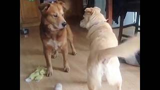 Making the First Move: Doggo Edition