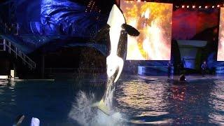 Shamu's Celebration: Light Up the Night (Full Show) at SeaWorld San Diego 6/15/15