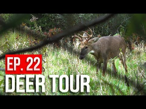 Xxx Mp4 Bucks SPARRING At 5 YARDS GROUND HUNTING Public Land DEER TOUR E22 3gp Sex