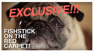 Pizza-loving Pug Fishstick gives Exclusive Celebrity Interview to Pet Guide Editor