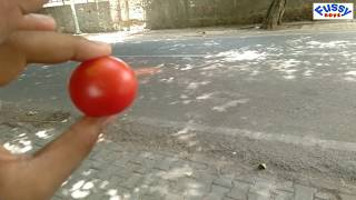 Crush tomato with bike Slow motion