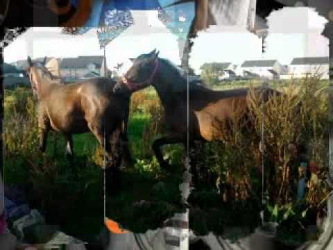 Xxx Mp4 Horses Xx 3gp Sex