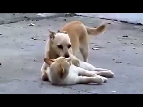 Xxx Mp4 Wild Animal Sex Love Funny Dog And Cute Cat 3gp Sex
