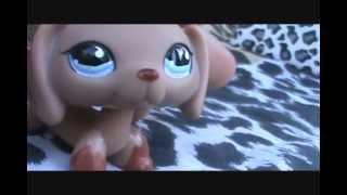 Littlest Pet Shop: Your Love is My Drug ♬