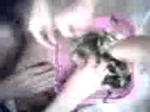 Xxx Mp4 Video Oyes 39 Ahhhhh Pedas Bgt 3gp 3gp Sex