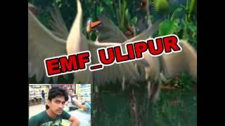 O Jorina Bangladeshi Bird Song Kobir Bakul Ulipur 2016