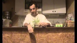 Les bienfaits de l'herbe d'orge