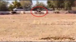 Weird human / dog hybrid caught on camera
