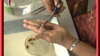 Cockroach Dissection