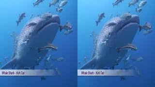 The Amazing Underwater World of Asia - for Virtual Reality 3D
