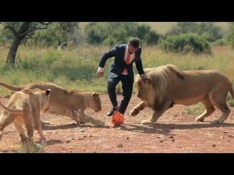 hombre juega fútbol con leones