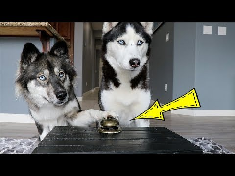 Ring the Bell Get the Treat