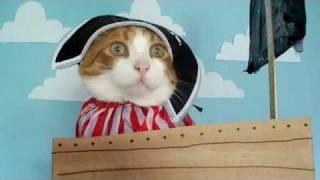 Cute Pirate Cat