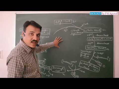 Easy way to learn Krebs Cycle