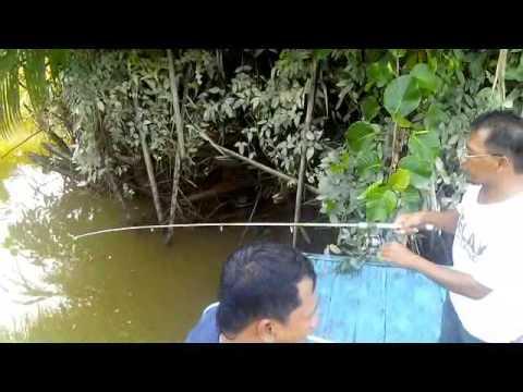 Memancing udang galah di delta sungai mahakam full movie