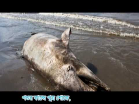 Xxx Mp4 আহারে সুন্দরবন Ahare Sundarban By Tuhin Kanti Das 3gp Sex