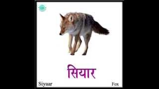 Learn Hindi : Wild Animals (English)