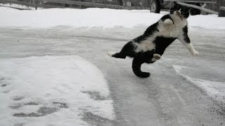 Cats and Dogs Slipping on Ice Compilation