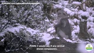 Nature Documentary 2015 Mystery Monkeys of Shangri La full HD english subtitles