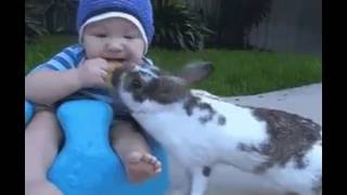 a cat dares to snatch a biscuit from a baby .so funny