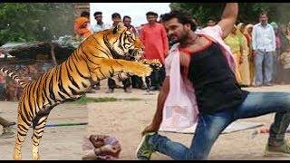 देखिये खेसारी लाल असली बाघ से लड़ें, Khesari Lal With Tiger | Teri Meherbaniyan |  Bhojpuri Film News