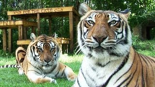 Meet Shere Khan & China Doll
